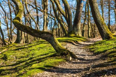 Foto zur Meldung: Baum des Jahres