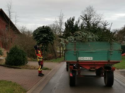 BBG - Feuerwehren sammeln Tannenbäume ein