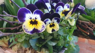 Blumen zum Frauentag