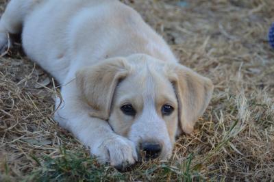 Termin zur Abschlagszahlung Hundesteuer / Grundsteuer