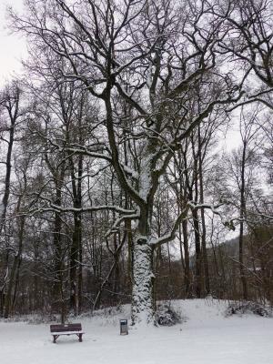 Stadtpark von Olaf Jaenicke