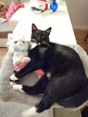 Foto zur Meldung: Katze Luna