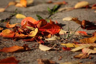 Foto zur Meldung: Bekanntmachung über die Annahme von Gartenabfällen