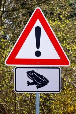 Bild der Meldung: Krötenwanderung hat begonnen
