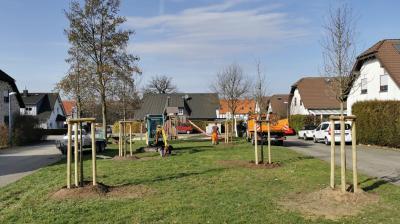 Foto zur Meldung: Neue Jungbäume für die gemeindlichen Grünanlagen