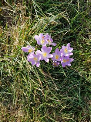 Der Frühling naht...einen schönen guten Morgen in Sassnitz