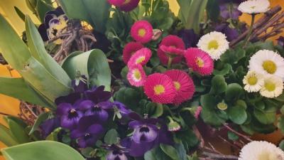 Bild der Meldung: FRAUENPOWER - Blümchen für unsere Ladys zum Frauentag