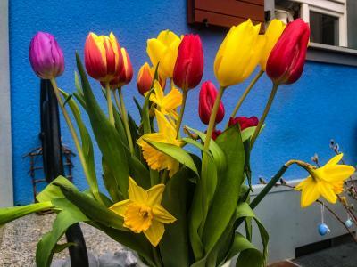 Foto zu Meldung: Blumige Grüße zum Frauentag