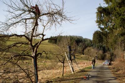 Pflegeschnittmassnahmen von Obstbäumen