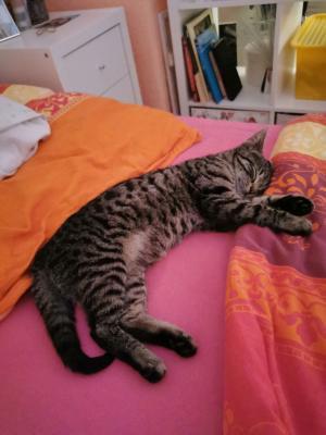 Foto zur Meldung: Katze Elli und ihr neues Zuhause