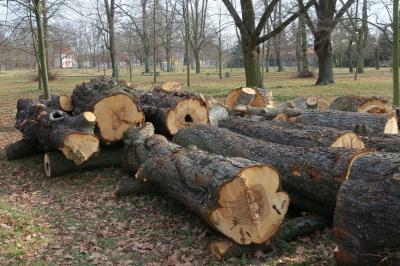 Foto zur Meldung: Totes Holz sichert die ökologische Vielfalt in Calau