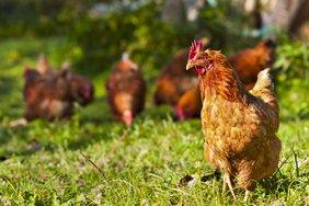Foto: stock.adobe.com; Ivan Spirko