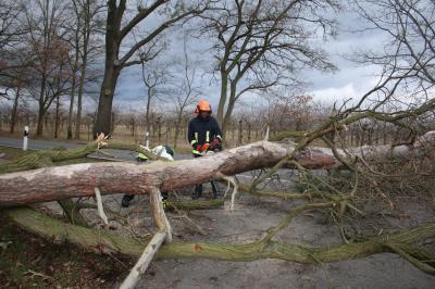 Foto zur Meldung: Baum gefährdete Radfahrer