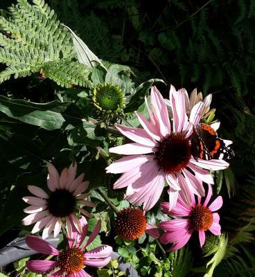 Biene, Schmetterling und Käfer sagen: Danke! Jetzt neue Anträge stellen für mehr Biodiversität