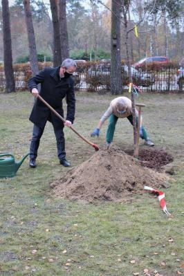 Bürgermeister Andreas Igel (li.) pflanzt Kirschbaum