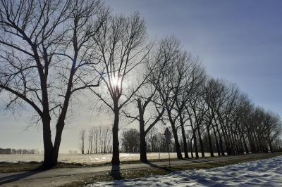 Foto zu Meldung: Fäll- und Schnittarbeiten an Reudener Bäumen