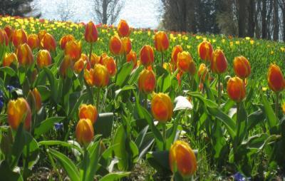 Frühling in Sanitz
