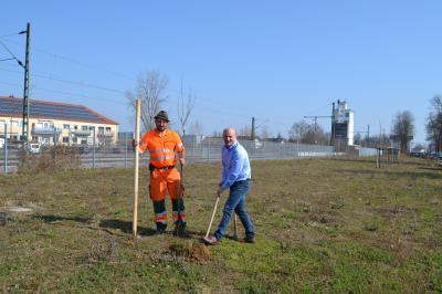 Foto zur Meldung: Ein Birnbaum für die Marktgemeinde