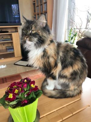 Foto zur Meldung: Katze Lea