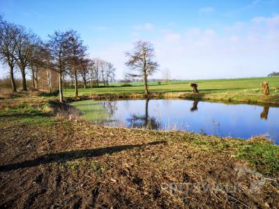 Der Dorfteich an der alten B 103 in Falkenhagen ist aufgeräumt. Viele Spaziergänger haben ihn neu für sich entdeckt. Foto: Beate Vogel