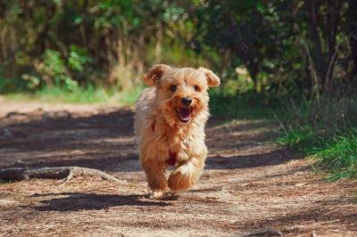 Bild der Meldung: Neue Hundesteuersatzung tritt in Kraft
