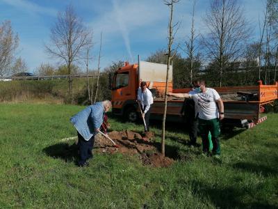 Foto zur Meldung: Bürgerin Gisela Höfeld spendet der Gemeinde einen Ginkgo-Baum