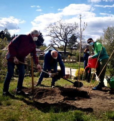 Baumpflanzung zum Tag des Baumes in Lehnin