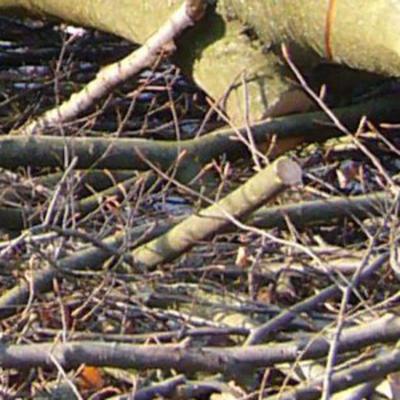 Baum- und Strauchschnitte
