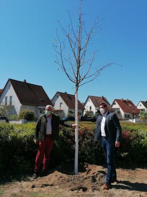 Eiko Leitsch, Geschäftsführer der Sachverständigenbüro Leitsch GmbH, und Bürgermeister Jan Fischer (v.l.n.r.) freuen sich gemeinsam über die zwei neuen Bäume auf dem Spielplatz an der Schillerbrücke in Nauheim. © Gemeinde Nauheim
