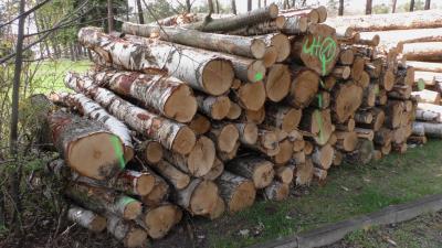3 Polter Holz stehen zur Versteigerung bereit