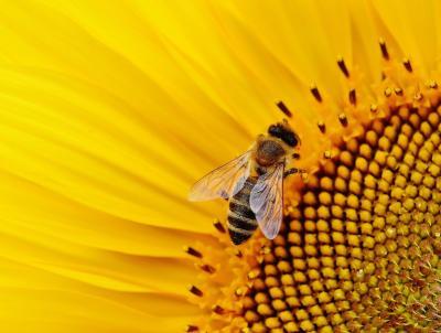 Anlässlich des Weltbienentages findet in der Zeit vom 20. bis 23. Mai 2021 der Bienenlauf statt.