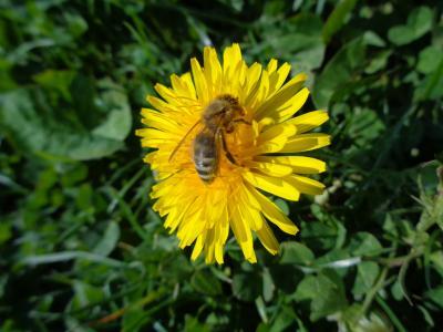 Foto zu Meldung: Unser Bienenprojekt