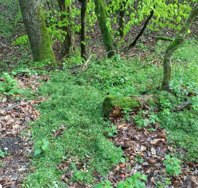Warum dürfen im Wald keine Gartenabfälle entsorgt werden?