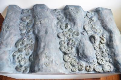 Neu in der Ausstellung: Fossiler Meeresboden mit Ammonshörnern