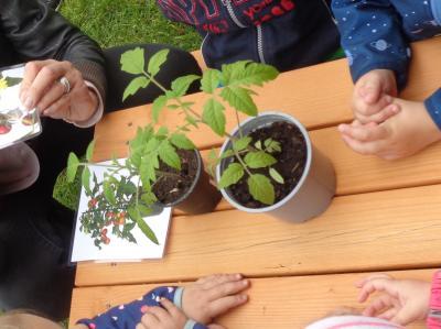 Foto zu Meldung: In der Krippe wird gepflanzt