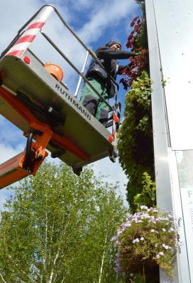 Mitarbeiter des Stadtbetriebshofes haben kürzlich den hängenden Garten am Stern neu bepflanzt I Foto: Martin Ferch