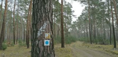 Lesefährte und Dichterweg im Kiefernwald... Foto: Dörthe Ziemer