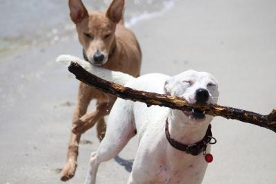Foto zur Meldung: Vierbeiner am Strand: Wichtige Regeln für Hundehalter