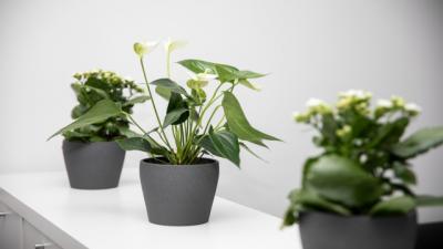 Drei Zimmerpflanzen auf einem weißen Regal