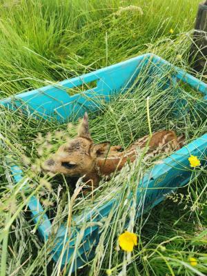 Rehkitzrettung: Die ersten Kitze sind gerettet