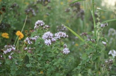 Wildblumenwiesen in Rehfelde