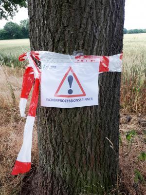 Foto zur Meldung: Eichenprozessionsspinner in Holzwickede