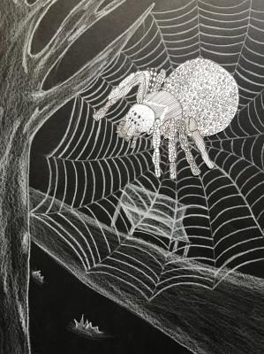 Faszinierende Welt der Spinnen