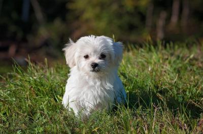 Foto zur Meldung: Fälligkeit der Hundesteuer