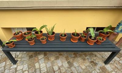 Pflanzengruß