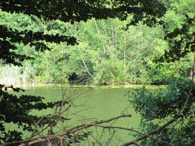 Schwarzer See Grumsin