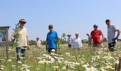 Foto zur Meldung: Kampf gegen das Jakobskreuzkraut