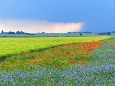Foto M. Lorenz, Brach- und Blühflächen in Boritz, Juni 2021