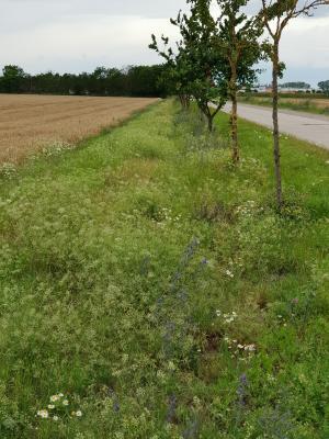 """Fotowettbewerb: """"VIA Natura 2000"""" ‒ Blühende Feldraine für den Biotopverbund!"""