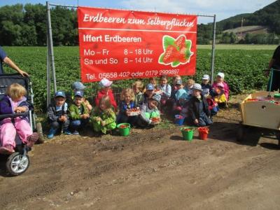 Kinder der Kindertagesstätte Bunte Welt beim Erdbeerpflücken